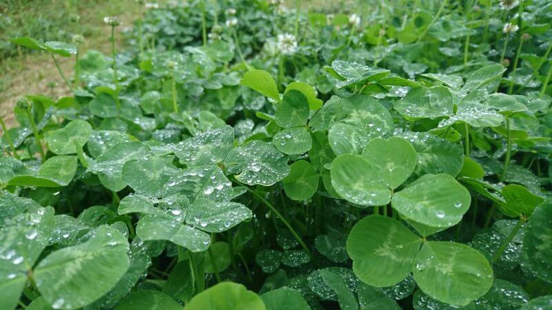 雨に濡れた草